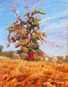 Blasted Oak, Sivens IMG_3676 x r